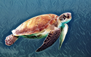 Turtle swiming